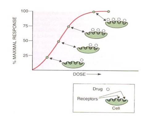 Zithromax 250 mg pfizer pharmaceuticals
