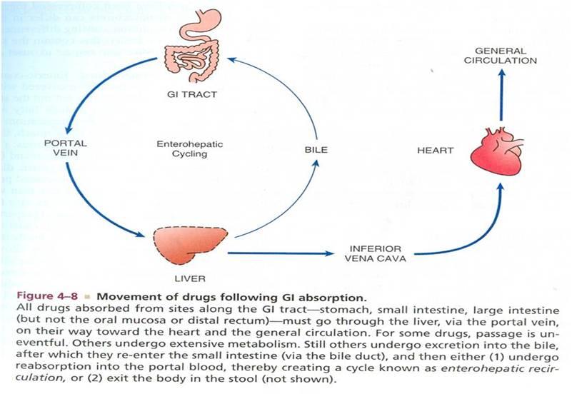 Voglibose and metformin hplc method for azithromycin
