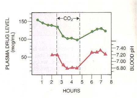 Figura 2: Alterata distribuzione del farmaco in risposta all'alterazione del pH plasmatico.  Curva in basso, pH plasmatico (extracellulare).  Si noti il declino del pH in risposta all'inalazione di CO2.  Curva in alto, livelli plasmatici del fenobarbital.  Si noti il declino dei livelli plasmatici del farmaco durante il periodo di acidoso extracellulare.  Questo declino risulta dalla redistribuzione del fenobarbital nelle cellule.