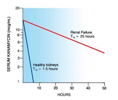 """Effetto dell'insufficienza renale sull'emivita della kanamicina.  La kanamicina è stata somministrata al tempo """"0"""" a due pazienti, uno con reni sani ed un altro con insufficienza renale.  Si noti che i livelli del farmaco scendono più rapidamente nel paziente con reni sani ed in modo estremamente lento nel paziente con insufficienza renale, indicando che l'insufficienza renale ha ridotto enormemente la capacità di rimuovere questo farmaco dall'organismo."""