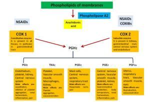 Figura 1. Effetti mediati da COX-1 e COX-2. COX ciclossigenasi, NSAIDs farmaci anti-infiammatori non steroidei, PGH2 prostaglandin H2, PGI2 prostaglandina I2, TxA2 tromboxano A2, PGD2 prostaglandin D2, PGE2 prostaglandina E2, PGF2 prostaglandina F2alpha